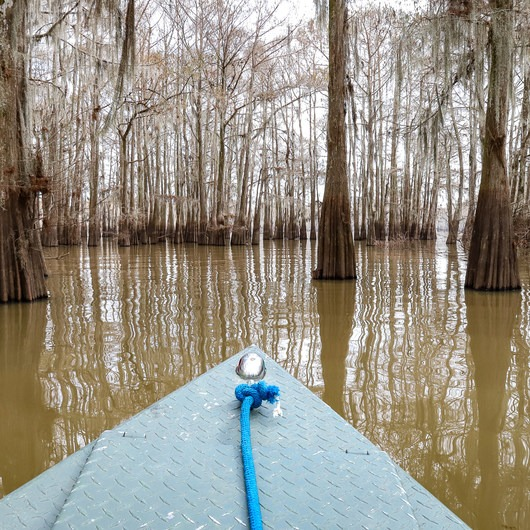 Atchafalaya Swamp Boat Tour