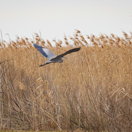 Blue Goose Nature Trail