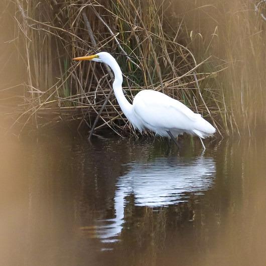 Sabine National Wildlife Refuge Wetland Walkway