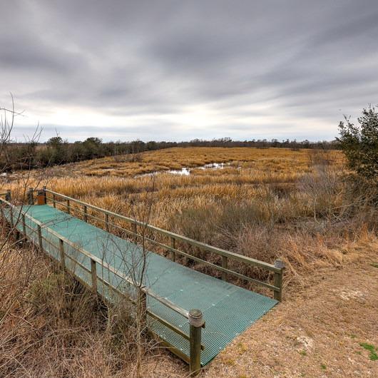 White Lake Wetlands Conservation Area Birding + Nature Trail