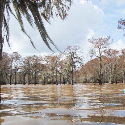 Henderson Swamp Paddling