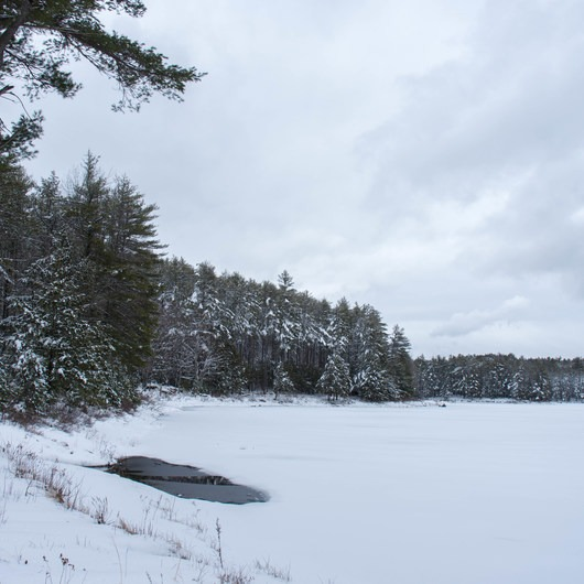 Meadow Lake Trail Snowshoe