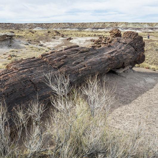 Giant Logs Loop Trail