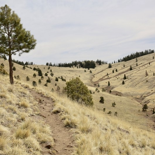 Gooseberry Springs Trail to Mount Taylor