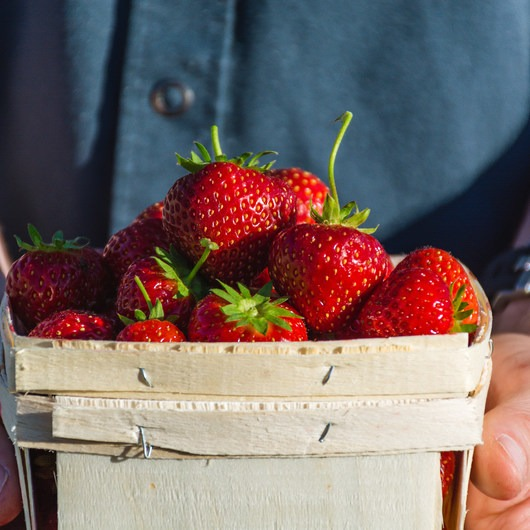 Berry Picking in New Hampshire