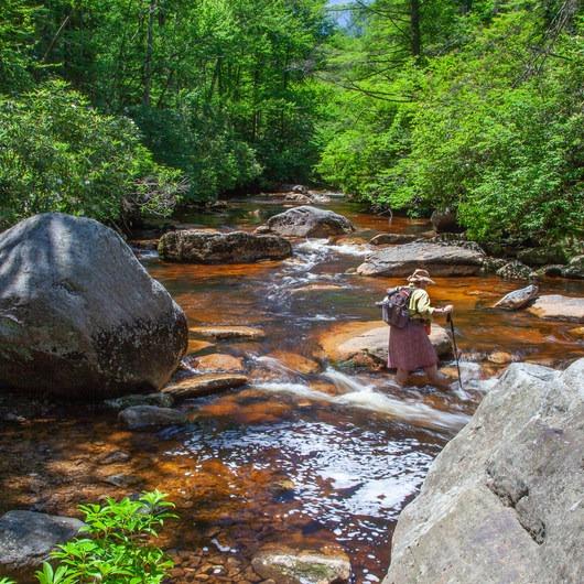 Otter Creek Wilderness Loop via Otter Creek + Shavers Mountain Trails