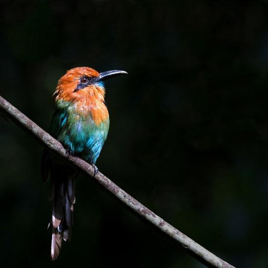 Birding at Pipeline Road