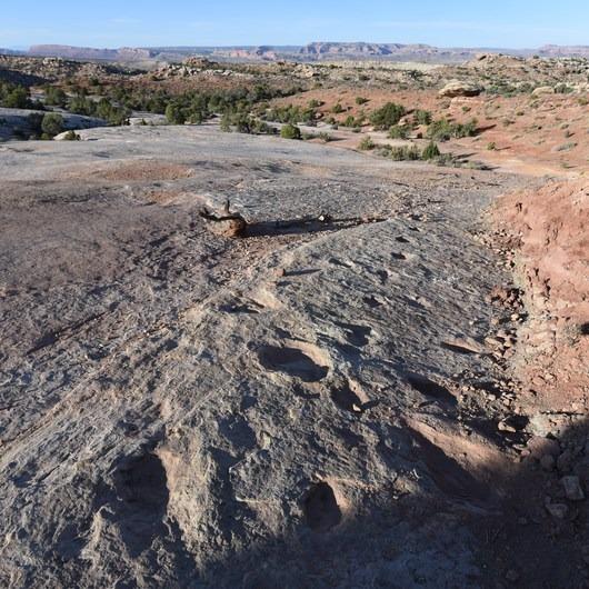 Klondike Bluff Dinosaur Tracks