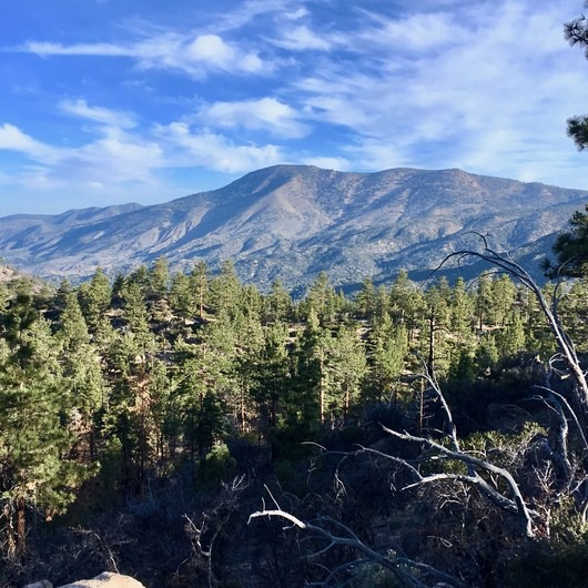 Pacific Crest Trail: California Section C
