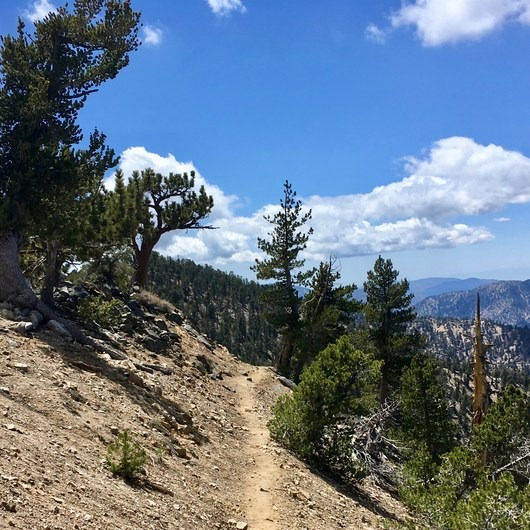 Pacific Crest Trail: California Section D