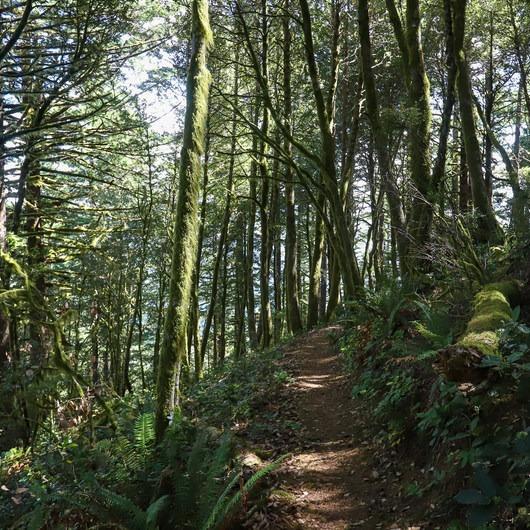 Humbug Mountain Trail