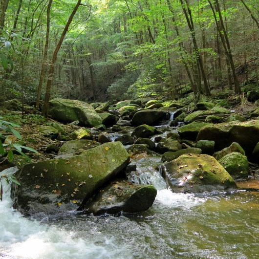 Conasauga River Trail