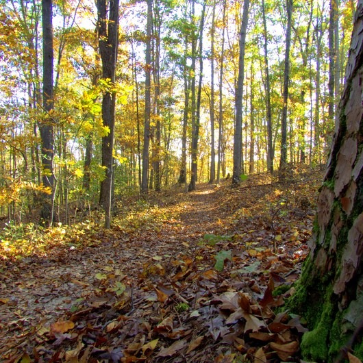 Old Atlanta Park Nature Trail