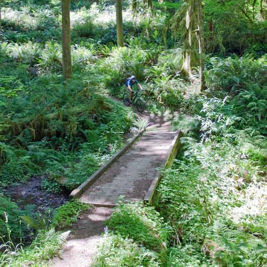 South Willamette Trail + Lower Hardesty Mountain Bike Ride