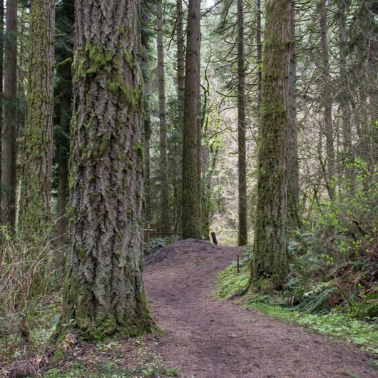 Whipple Creek Park