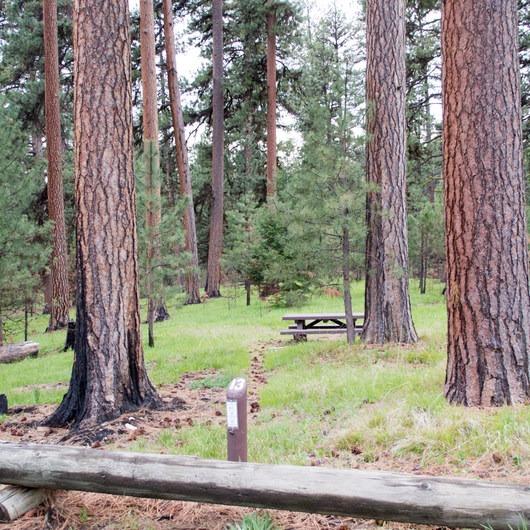 Ochoco Divide Campground