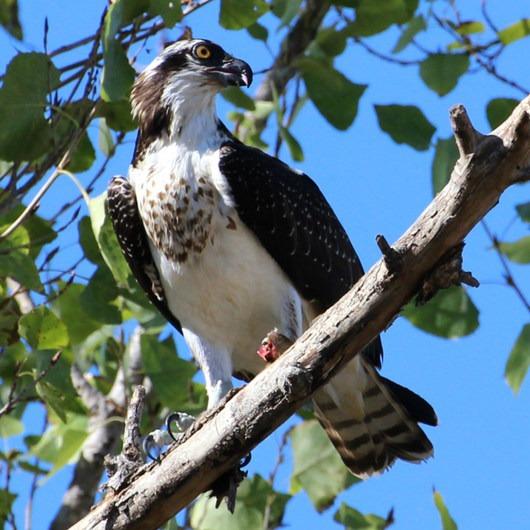 Sepulveda Wildlife Reserve