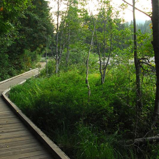 Trillium Lake Loop Trail