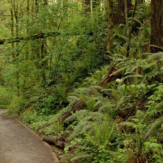 Wild Cherry Trail Loop