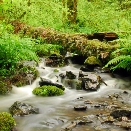 Tryon Creek State Park, Cedar Trail Hike