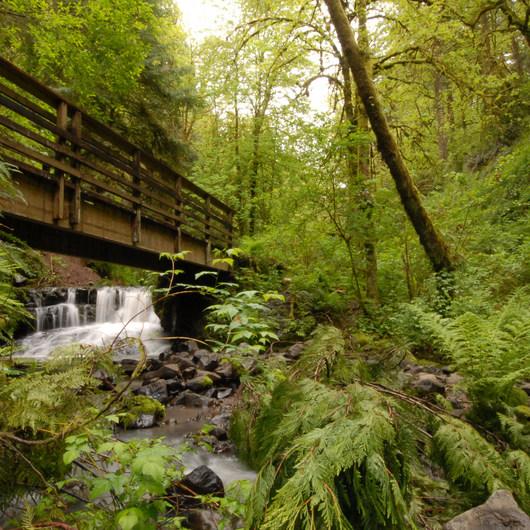 Lower Macleay Trail Loop