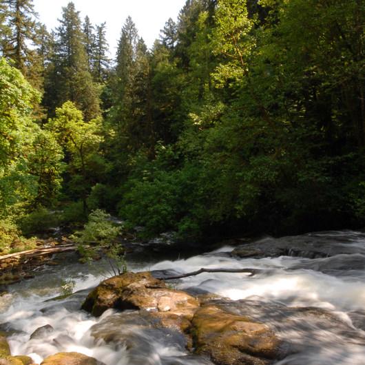 Lacamas Creek Loop Trail