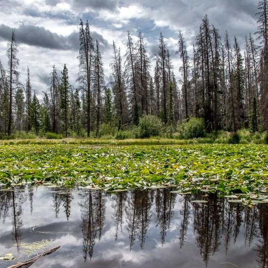 Lily Pad Lake via Salt Lick Trailhead