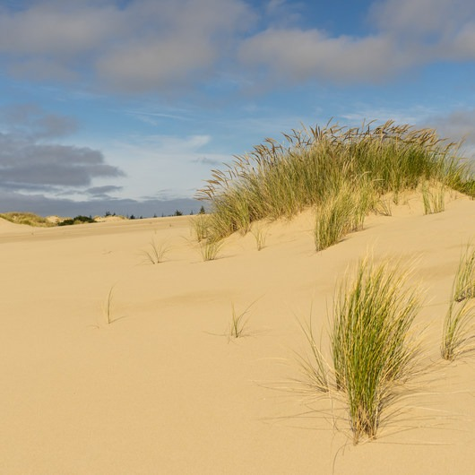 Oregon Dunes Loop Hike