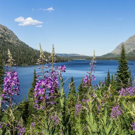 Two Medicine Lake Loop Hike
