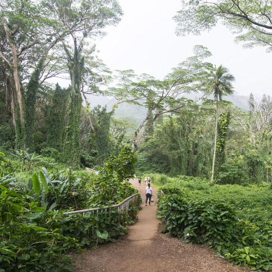 Mānoa Falls Hike