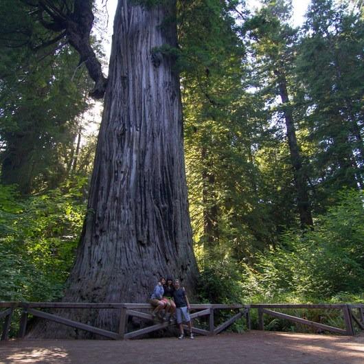 Big Tree Wayside
