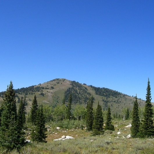Bloomington Peak Hike
