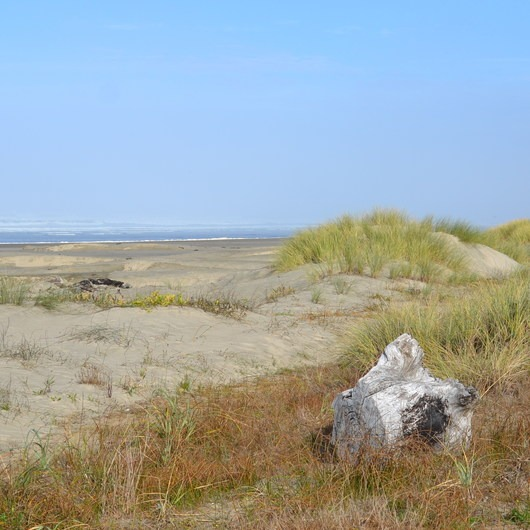 Driftwood Beach State Recreation Site