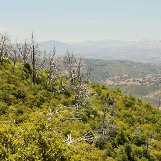 Silvercrest Trail