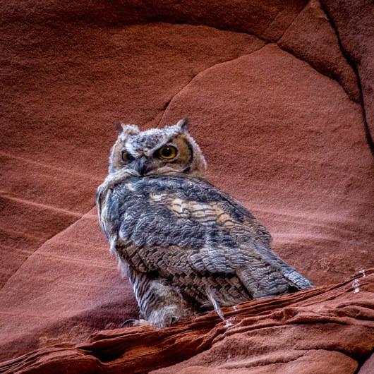 Rattlesnake + Owl Canyons