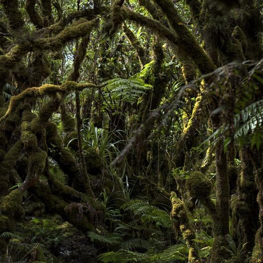 Kamakou Preserve + Pepe'opae Bog Trail