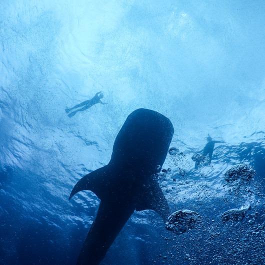 Gladden Spit + Silk Caye Marine Reserve
