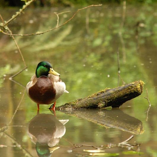 Pittock Bird Sanctuary Nature Trail
