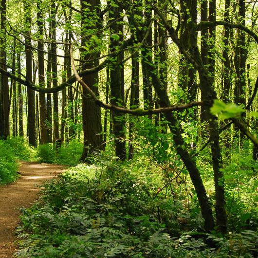 Marquam Nature Park + Trail