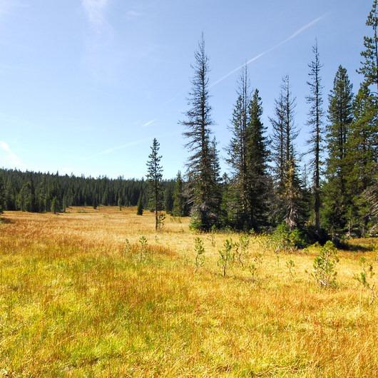Bonney Meadows Forest Camp