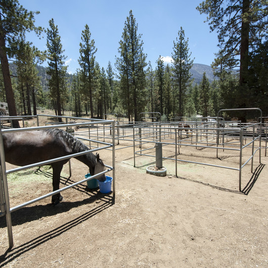 Wildhorse Family Equestrian Campground