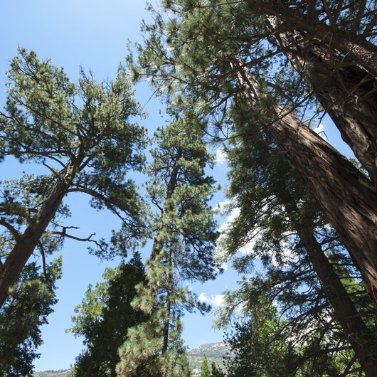 South Fork Campground, Santa Ana River