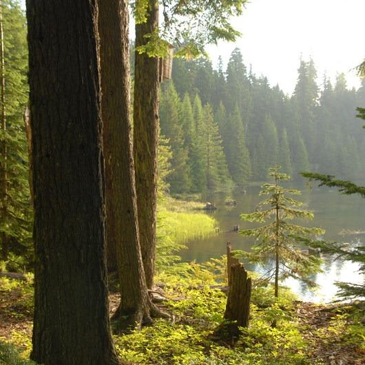 Timothy Lake Loop Trail