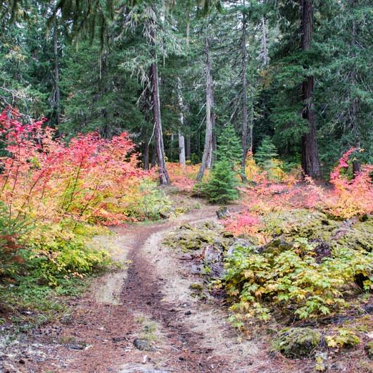 Santiam Wagon Road Trail: McKenzie River Trailhead