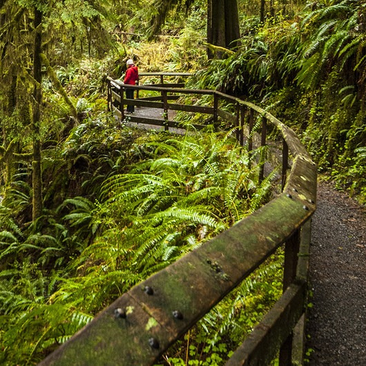 Quinault Rain Forest Nature Trail Loop