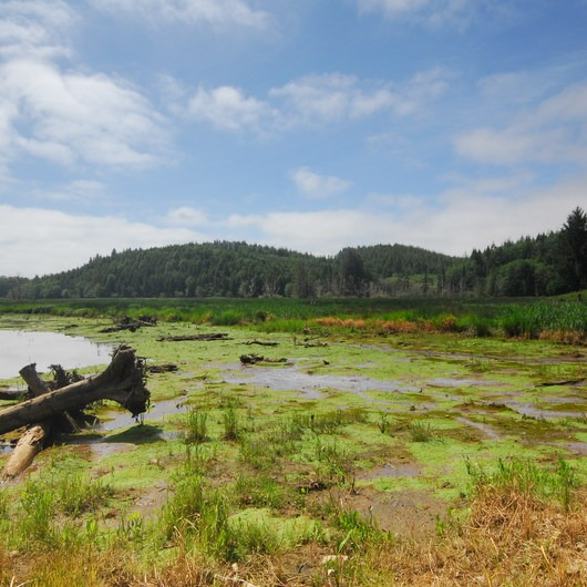 Netul River/South Slough Loop Trail