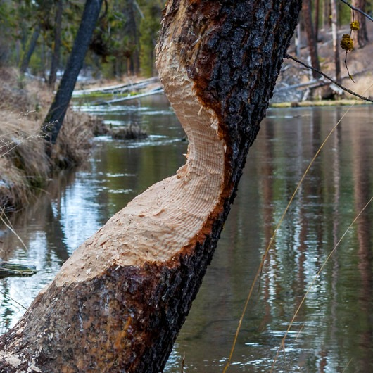 Fall River Trail
