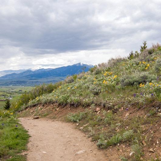 Triple Tree Trail