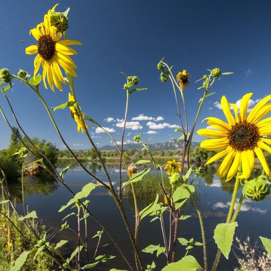 Walden Ponds Wildlife Habitat