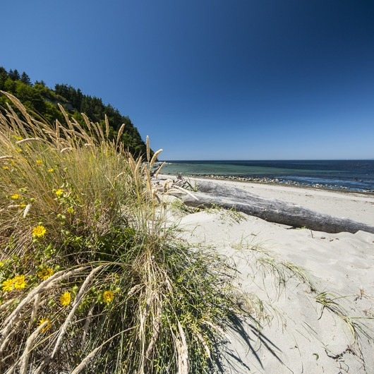 Fort Worden State Park Beach Campground + Upper Forest Campground